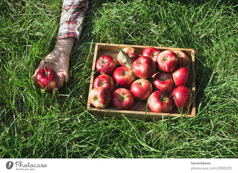 Flachlegen mit roten Äpfeln in Holzkiste und Frauenhand flache Verlegung Gras Kasten kariert Hand Landwirt reif Farbe frisch Außenaufnahme Diät Frucht lecker