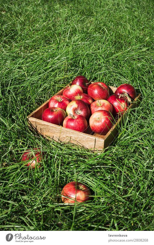 Flachlegen mit frischen reifen roten Äpfeln in einer Holzkiste Jahreszeiten Sommer Herbst Apfel flache Verlegung Gras Kasten Landwirt Farbe Außenaufnahme Diät