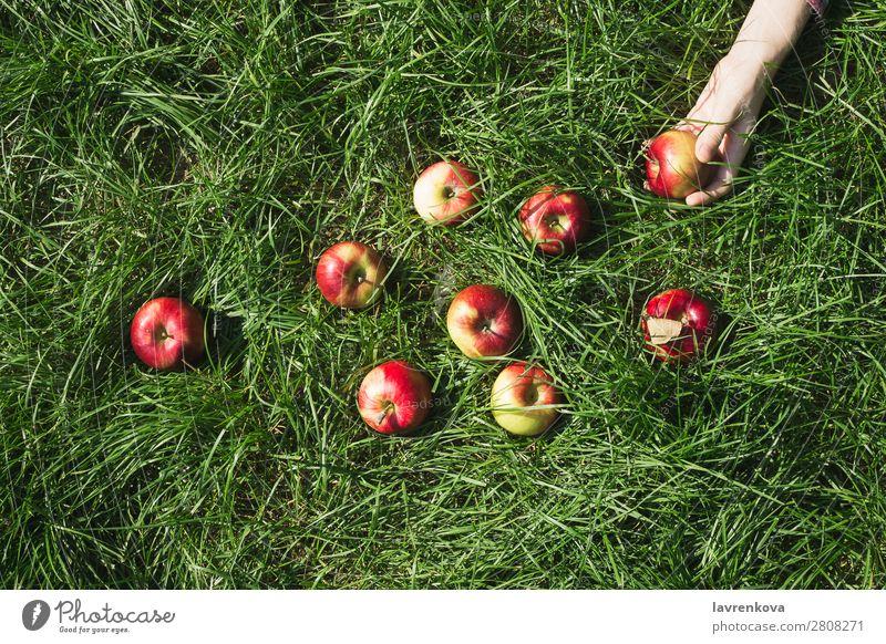 Frauenhand und roter reifer Bio-Apfel auf Gras Ackerbau Herbst Farbe Bauernhof Lebensmittel frisch Frucht Garten grün Hand Ernte Gesunde Ernährung Halt saftig