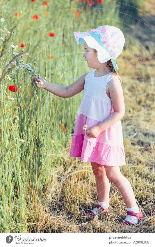Schönes kleines Mädchen auf dem Feld der Wildblumen. Lifestyle Freude Glück schön Sommer Garten Kind Mensch Frau Erwachsene Eltern Mutter