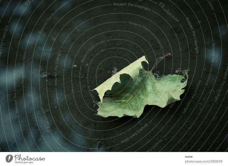 Bitte wenden! Natur Wasser Herbst Wetter Traurigkeit alt ästhetisch dunkel nass natürlich grün schwarz Tod Vergänglichkeit Zeit Herbstlaub herbstlich