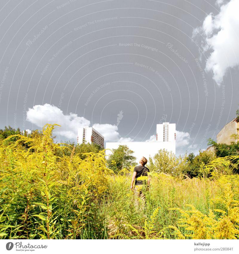 goldsuche Mensch maskulin 1 Umwelt Natur Pflanze Blume Sträucher Wiese Stadt Haus Hochhaus Architektur Fassade stehen bewachsen gelb Berlin Sommer