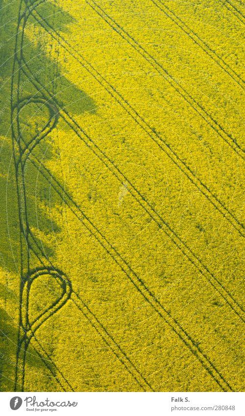 [Raps]ody with loops Natur Pflanze Einsamkeit ruhig Ferne gelb Umwelt Wärme Frühling Wege & Pfade Feld Ordnung ästhetisch Warmherzigkeit einfach Spuren