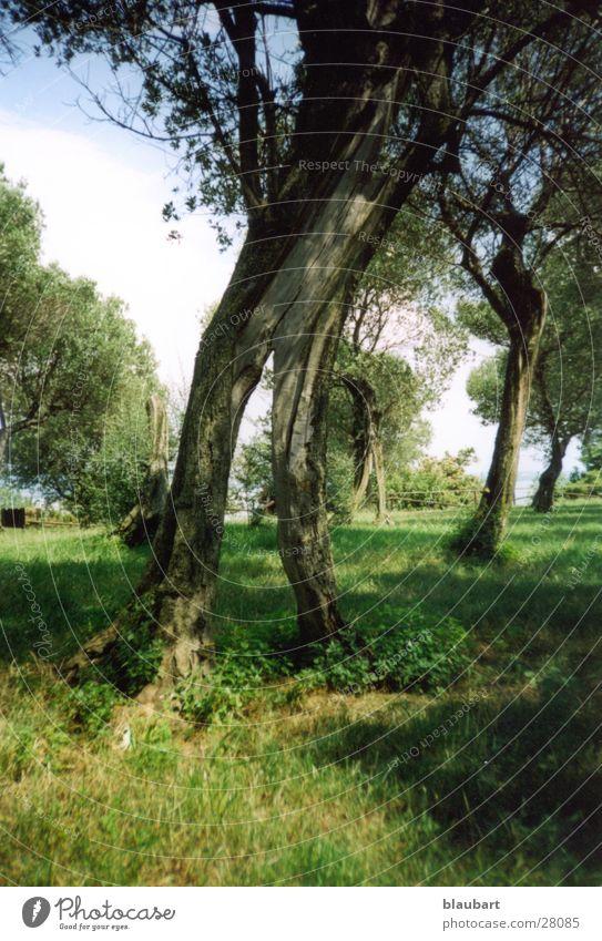 Finde die Maus grün Baum Suche Italien Südtirol Gardasee Mensch Sirmione