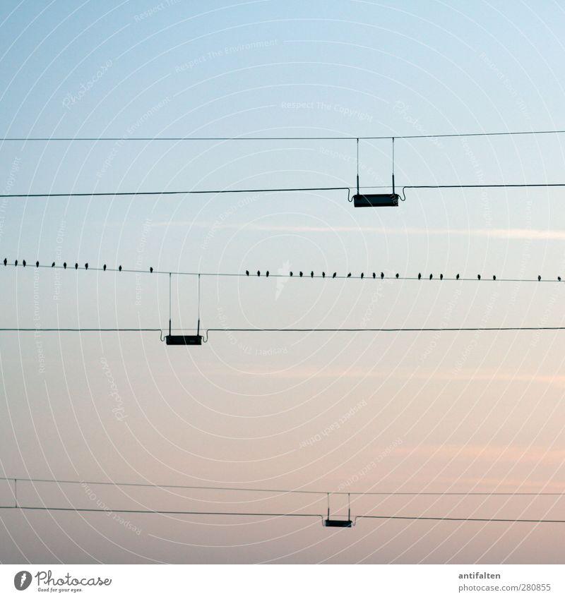 32 Kabel Natur Wolkenloser Himmel Sonnenaufgang Sonnenuntergang Sommer Stadtrand Stahlkabel Tier Vogel Tiergruppe blau parallel Linie Abenddämmerung Dämmerung
