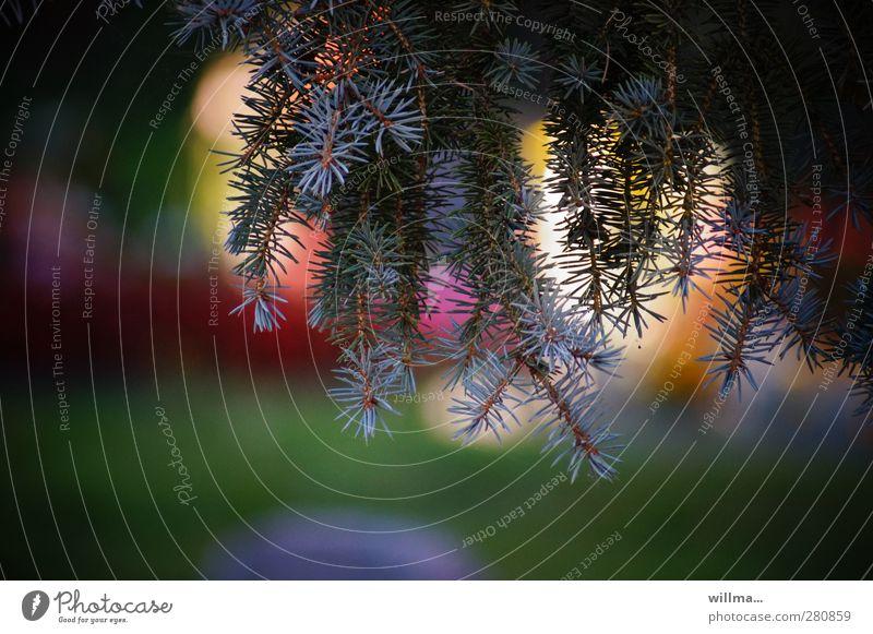 innehalten Natur Erholung ruhig Park Zufriedenheit Schutz Trauer Glaube harmonisch Meditation Friedhof Farbenspiel Nadelbaum trösten besinnlich zurückziehen