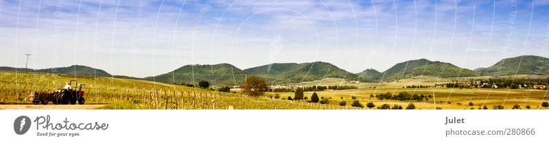 S C H Ö N E P F A L Z grün Sommer Baum Wald gelb braun orange Wein Dorf Burg oder Schloss Traktor Weinberg Winzer Pfälzerwald