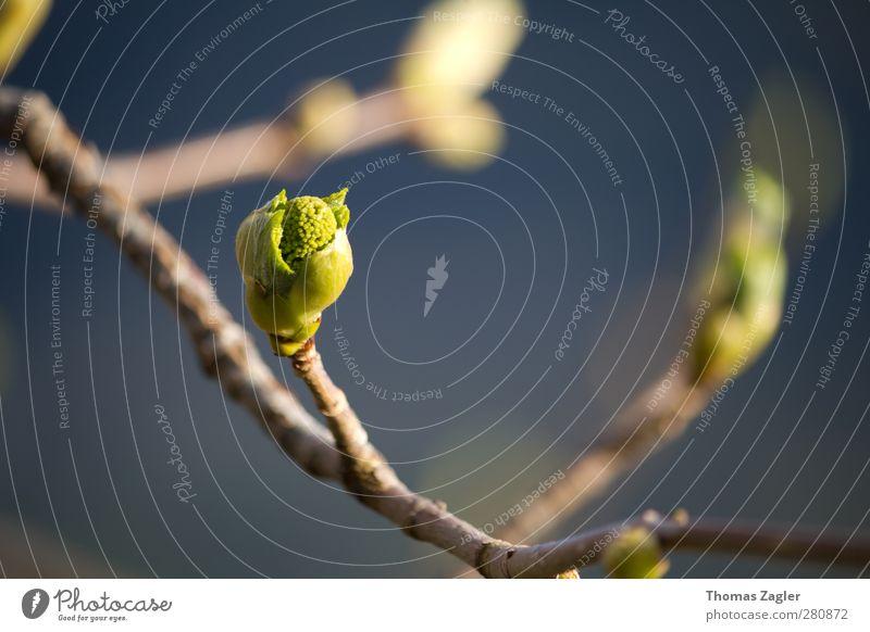 Awakening Umwelt Natur Pflanze Sonnenlicht Frühling Schönes Wetter Blatt Blüte Grünpflanze Feld Wald Alpen Holz Blühend Duft dünn fantastisch frisch schön blau