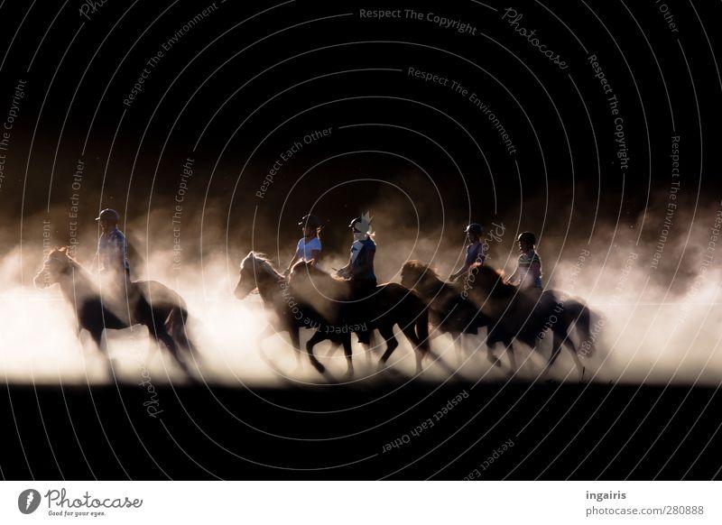 Töltende Isländer Mensch Menschengruppe Veranstaltung Reiter Reiterfest Sand Staub Staubwolke Pferd Island Ponys Bewegung leuchten ästhetisch natürlich wild