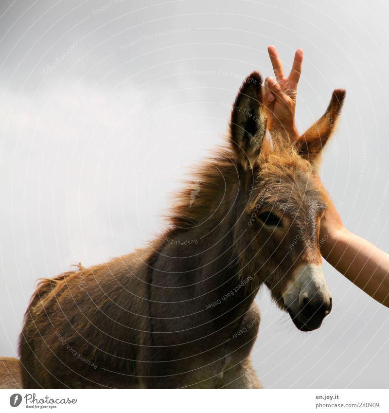 Eselsohren Arme Hand Finger Tier Nutztier 1 Zeichen frech Fröhlichkeit lustig braun grau Freude Lebensfreude böse hinterlistig Witz Farbfoto Außenaufnahme