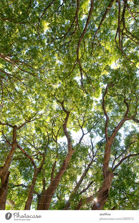 Krone, ohne König Frühling Sommer Schönes Wetter Baum Park Wald ruhig Baumkrone Blätterdach Farbfoto
