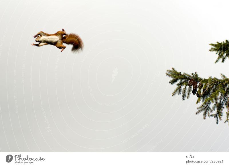 einmal flieg ich noch Natur Pflanze grün Sommer weiß rot Tier Wald Umwelt Leben Frühling Herbst lustig klein Garten fliegen