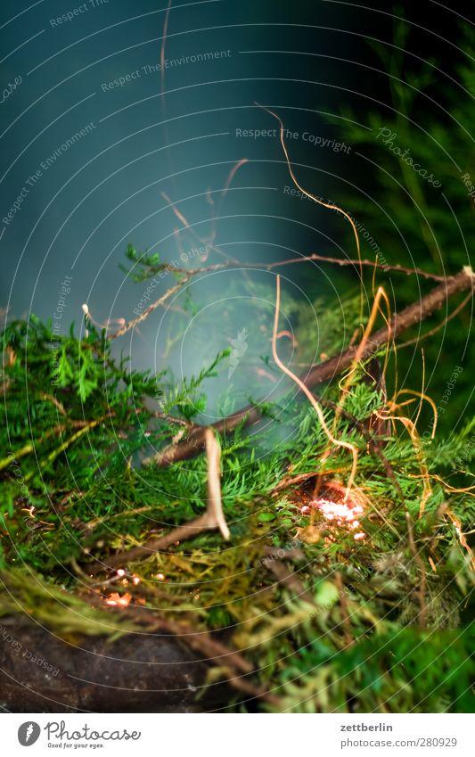 Feuer Garten Nachtleben Umwelt Natur Pflanze Sommer Klima Wärme Blatt Grünpflanze Park heiß gefährlich Vergänglichkeit Lebensbaum Ast Zweig brennen Funken Rauch