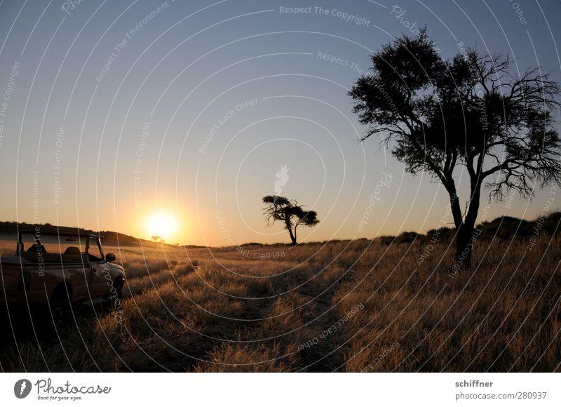 Sundowning Umwelt Natur Landschaft Pflanze Wolkenloser Himmel Sonne Sonnenaufgang Sonnenuntergang Sonnenlicht Baum Gras Wüste ruhig Steppe Silhouette Gegenlicht