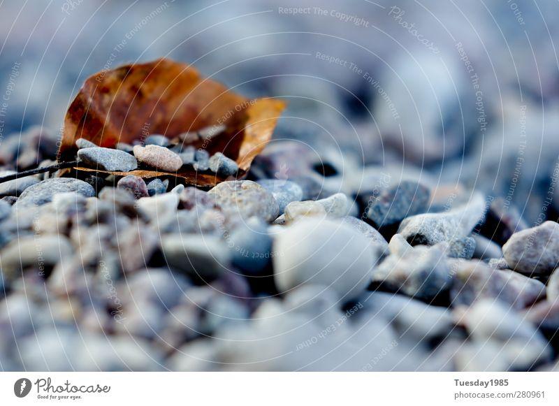 Steinchen in der Brandung Natur Pflanze Sommer Wasser Blatt Ferne Herbst Küste Holz Glück Stein Sand Zufriedenheit Urelemente Seeufer Glaube