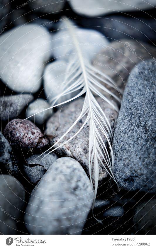 ich hatte schon bessere zeiten Natur blau Wasser weiß schön Tier schwarz Umwelt kalt grau Sand Wetter ästhetisch Urelemente Schönes Wetter stark