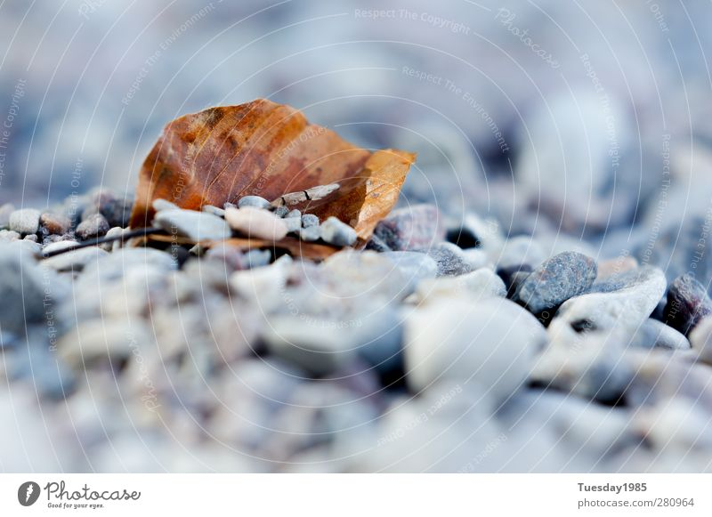zudecke aus stein Natur Sommer Umwelt kalt Herbst Frühling Sand Erde einzigartig nah sportlich