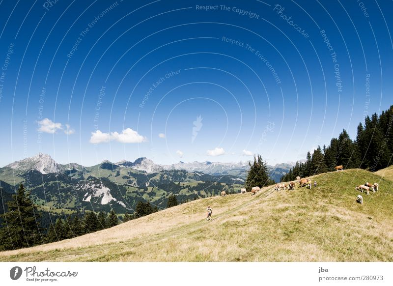in den Alpen Natur Sommer Tier Wolken ruhig Landschaft Erholung Berge u. Gebirge Leben Gras Wege & Pfade Freiheit Felsen Zufriedenheit wandern Ausflug
