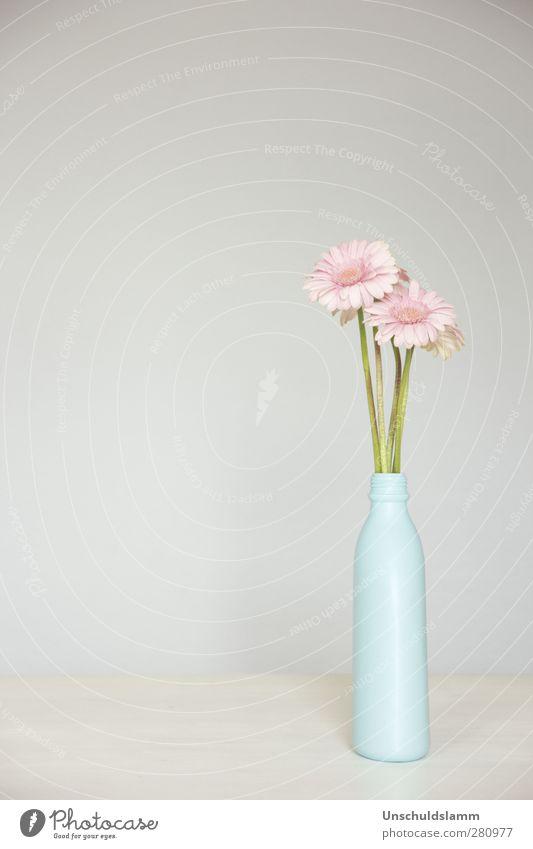 Plastic beauty Stadt blau Blume Umwelt grau hell rosa Wohnung Design Raum Häusliches Leben Dekoration & Verzierung Geburtstag ästhetisch Lebensfreude einzigartig