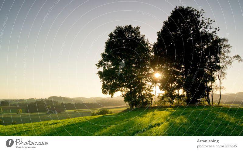 am Hügel Umwelt Natur Landschaft Pflanze Luft Himmel Wolkenloser Himmel Sonne Sonnenaufgang Sonnenuntergang Sonnenlicht Sommer Wetter Schönes Wetter Wärme Baum