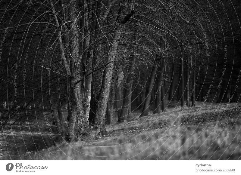 Am Seeufer Natur schön Baum Einsamkeit ruhig Winter Landschaft Wald Erholung Umwelt Wiese Herbst Wege & Pfade Traurigkeit träumen Zeit