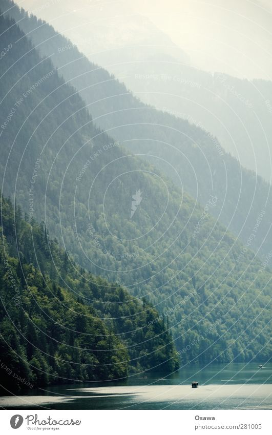 Königsee Natur Landschaft Wasser Baum Wald Alpen Berge u. Gebirge Berchtesgadener Alpen Berchtesgadener Land Seeufer Königssee Berghang Denken Nebel Staffelung