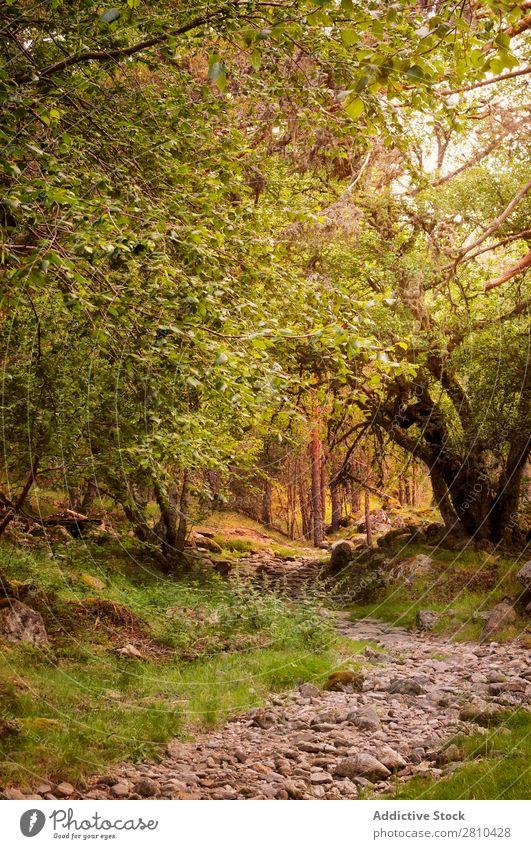 Felsiger Weg im alten Wald Straße Sonnenuntergang Wege & Pfade nach oben Kiefer Provence gehen Felsen Natur schön Menschenleer wandern Stein Sommer Farbe