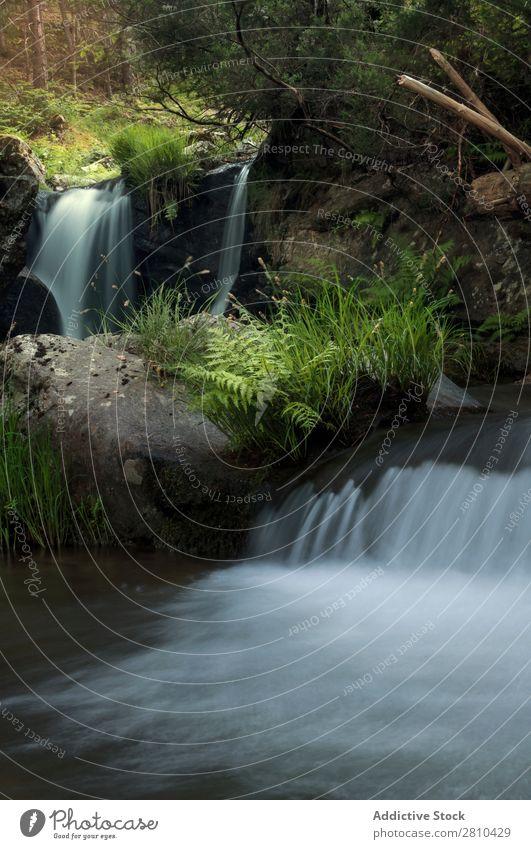 Schöner Wasserfall im Wald Moos Landschaft Stein Phantasie grün Natur dunkel Felsen Fluss Sonne weiß natürlich frisch Baum Außenaufnahme wild Blatt nass Sommer