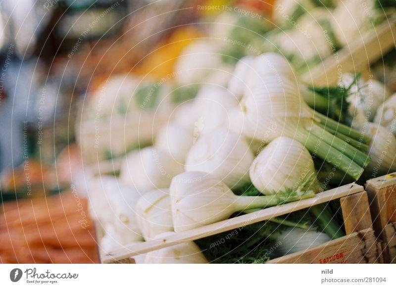 Frischer Fenchel Lebensmittel Gemüse Ernährung Bioprodukte Vegetarische Ernährung frisch Gesundheit grün weiß Gemüsehändler Gemüseladen Markt verkaufen