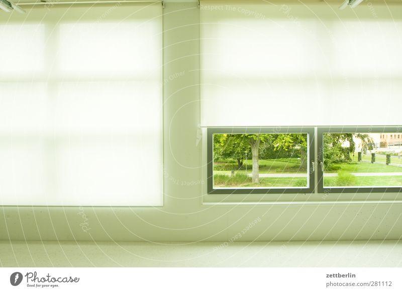 Fenster Grünpflanze Garten Park Wiese Wald Haus Bauwerk Gebäude Architektur Mauer Wand Fassade Tür historisch aschersleben bau urban wallroth Fensterscheibe