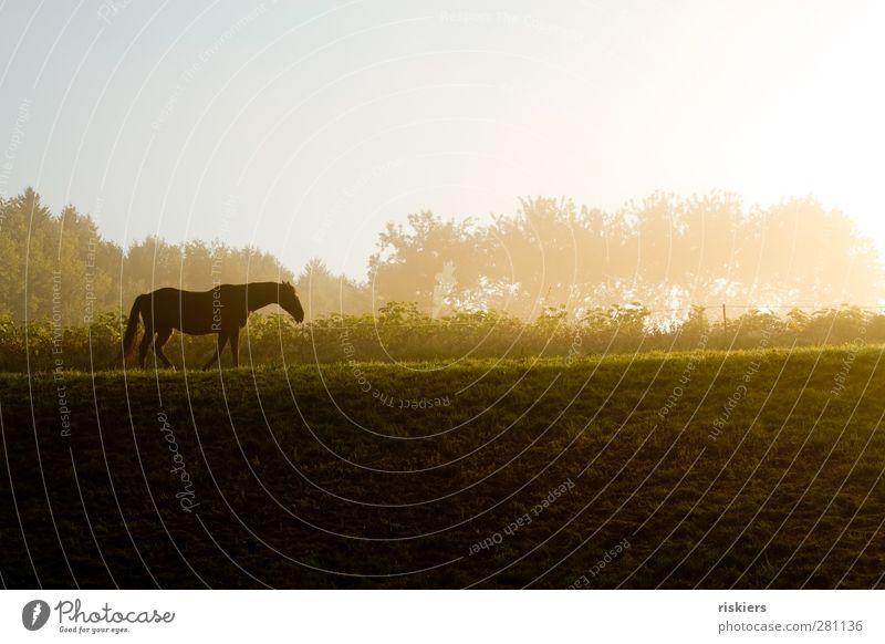 wohin geht die reise Umwelt Natur Landschaft Sonnenaufgang Sonnenuntergang Sonnenlicht Herbst Nebel Wiese Feld Hügel Tier Haustier Pferd 1 gehen wandern Gefühle
