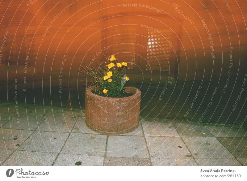 straßen trash. Blume Sträucher Grünpflanze Blumentopf Stadt Mauer Wand Fenster trashig Nacht Asphalt Steinboden Farbfoto Außenaufnahme Menschenleer Kunstlicht