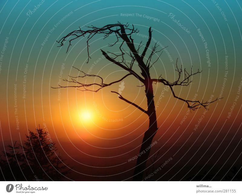 der sonnenanbeter Umwelt Natur Sonnenaufgang Sonnenuntergang Baum Erzgebirge Stimmung Umweltverschmutzung Umweltschutz bizarr kahl laublos eigenwillig