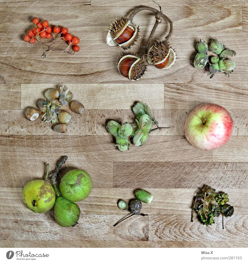 Herbstkollektion Blatt Holz braun Frucht Lebensmittel Ernährung Apfel Sammlung Beeren herbstlich Nuss Birne Kastanie Haselnuss Eicheln