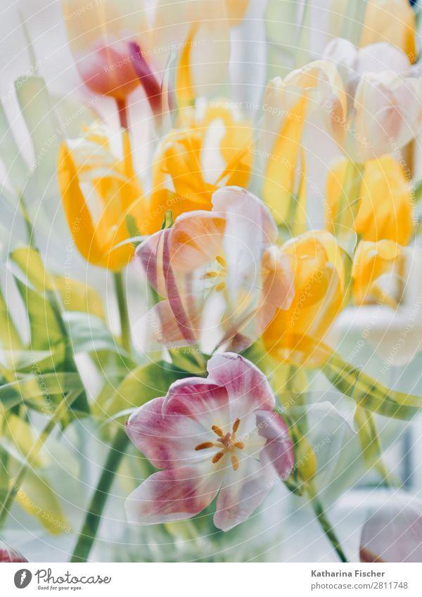 Bunter Blumenstrauß Kunst Natur Pflanze Frühling Sommer Herbst Winter Tulpe Blatt Blüte Blühend leuchten Fröhlichkeit schön mehrfarbig gelb grün violett orange