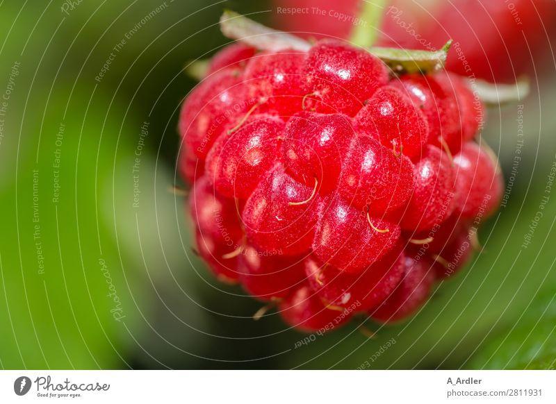 Himbeere Lebensmittel Frucht Himbeeren Ernährung Natur Pflanze Sommer Sträucher Nutzpflanze Garten Feld Essen genießen Duft frisch Gesundheit lecker nachhaltig