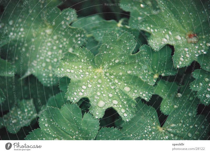 Blatt im Regen Wassertropfen