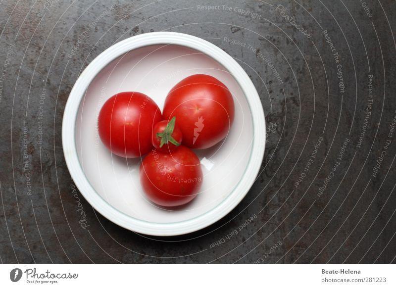 Tomaten! Salat! Humppa! Natur weiß Pflanze rot Gesundheit Lebensmittel frei ästhetisch Ernährung Fitness genießen Gemüse Ernte reif Ackerbau Duft