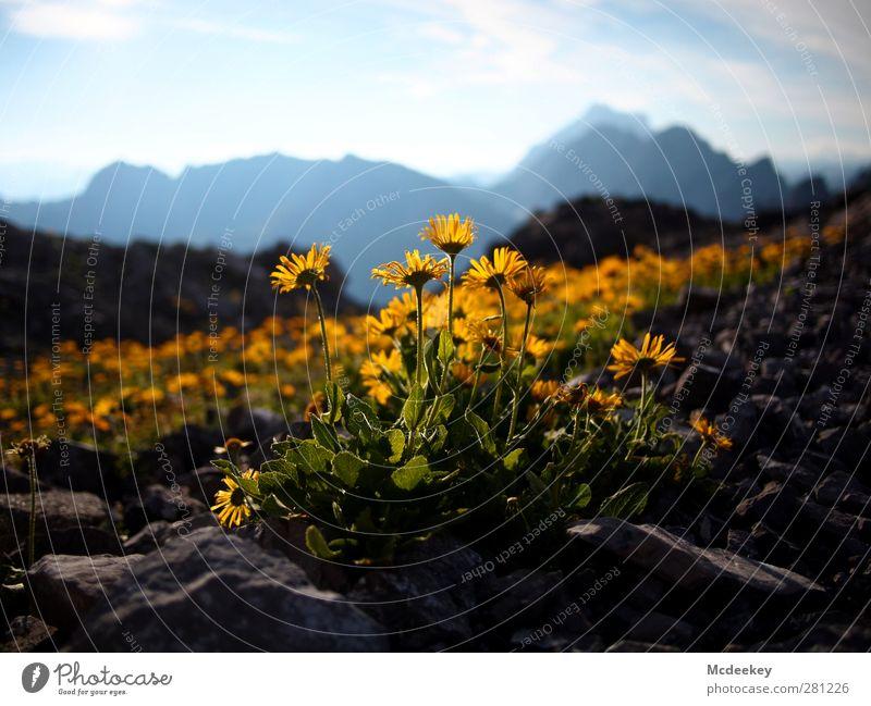 Yellow Light Natur blau grün weiß schön Sommer Pflanze Blume Blatt schwarz Landschaft gelb Berge u. Gebirge grau Blüte Beleuchtung