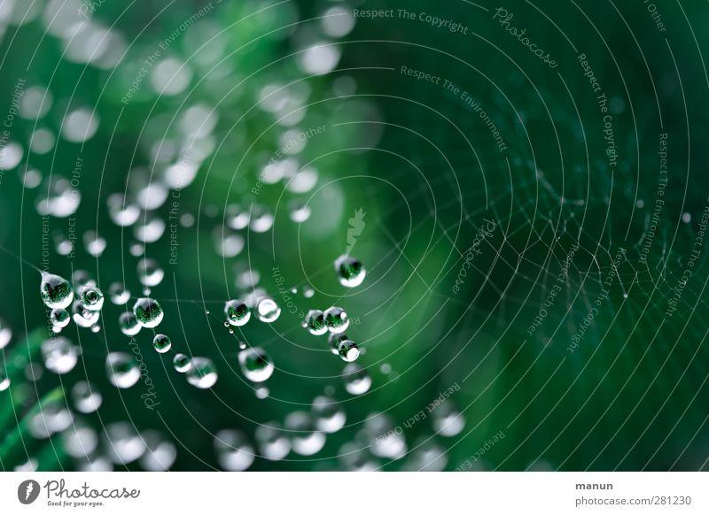 Wasserperlen Natur Tier Wassertropfen Regen Spinnennetz netzartig leuchten authentisch einfach glänzend klein nass grün ästhetisch fein hängend Farbfoto