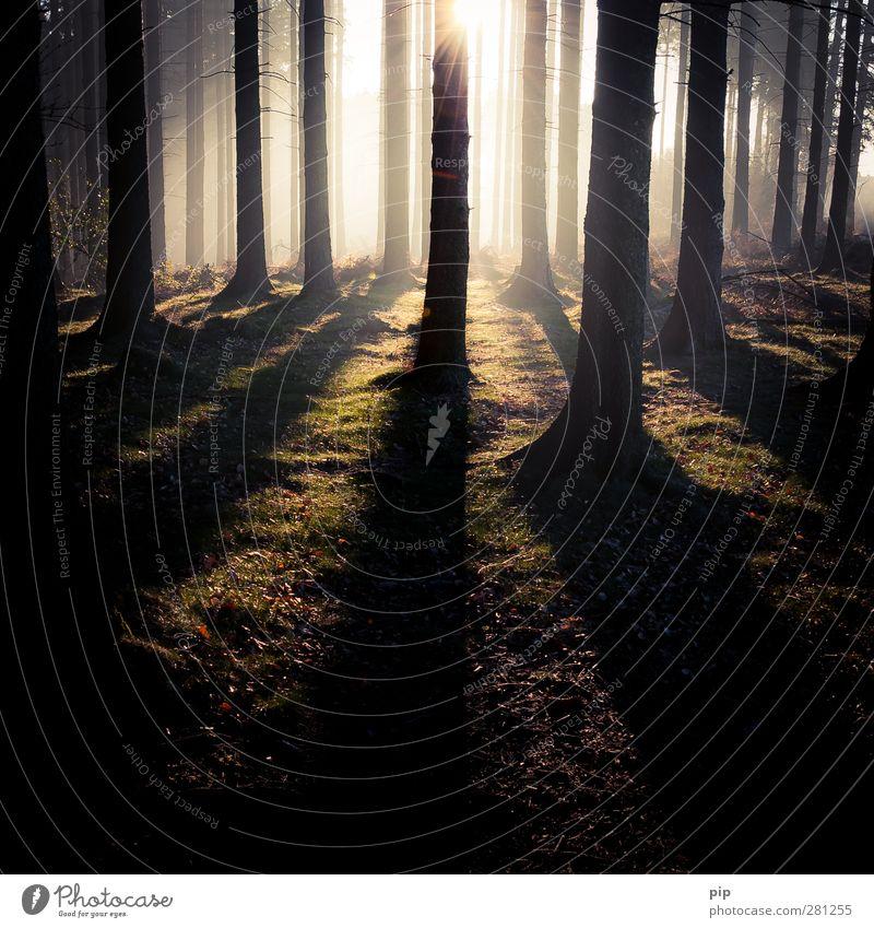 unterbelichtung Natur Pflanze Baum ruhig Wald Umwelt dunkel Wärme Herbst hell Nebel Schönes Wetter geheimnisvoll Tanne Baumstamm Moos