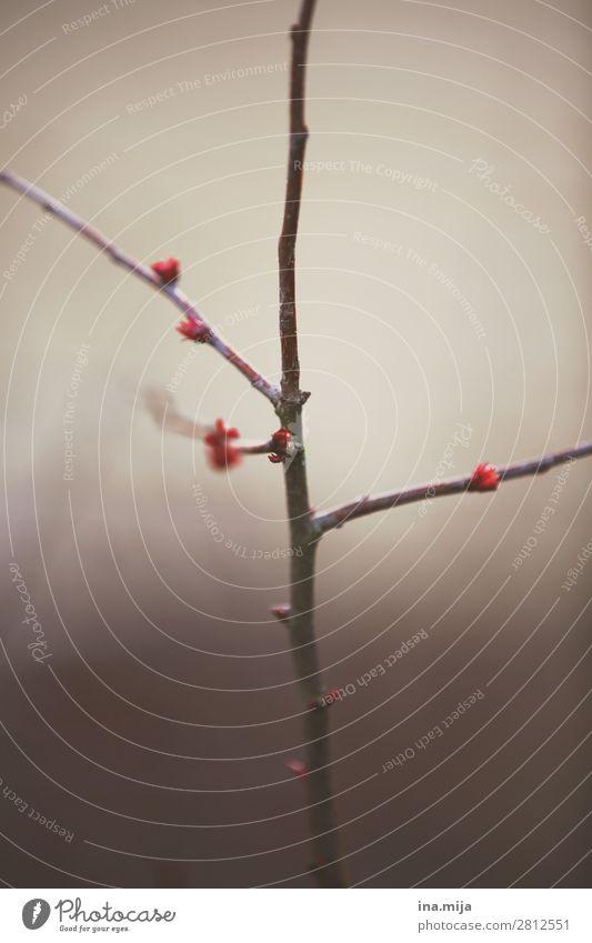 Tschüss Winter! Natur Pflanze rot Baum ruhig Wald Umwelt Blüte Frühling Garten Stimmung Park träumen Wachstum Sträucher
