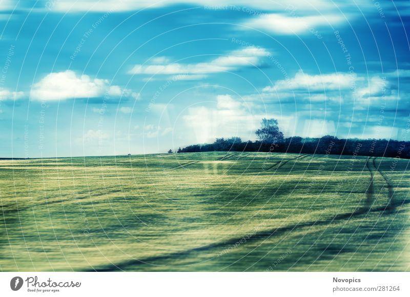 Train To The Fields Lebensmittel Getreide Landwirtschaft Forstwirtschaft Natur Landschaft Himmel Wolken Sommer Pflanze Baum Nutzpflanze Feld Hügel Bahnfahren