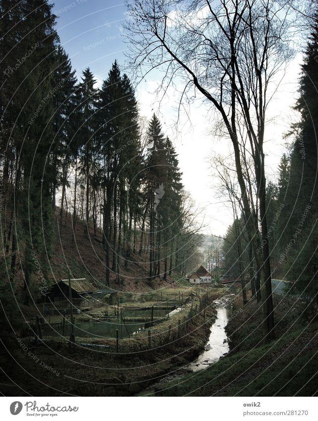 Waldstück Himmel Natur Pflanze Baum Einsamkeit Wolken Landschaft Haus Umwelt dunkel Horizont Deutschland Wetter Klima Zufriedenheit