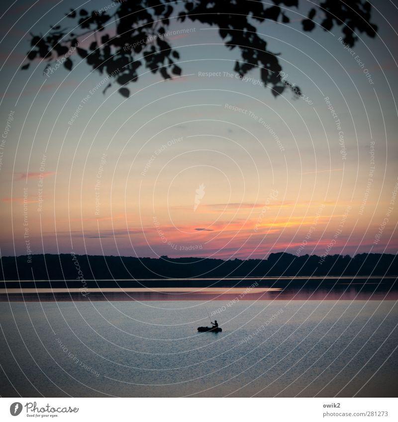 Alle Zeit der Welt Mann Erwachsene 1 Mensch Umwelt Natur Landschaft Wasser Himmel Horizont Klima Wetter Schönes Wetter Pflanze Baum Blatt Zweige u. Äste Wald