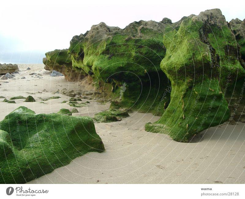 Green Stones Meer Stein Felsen Portugal Algen Ebbe