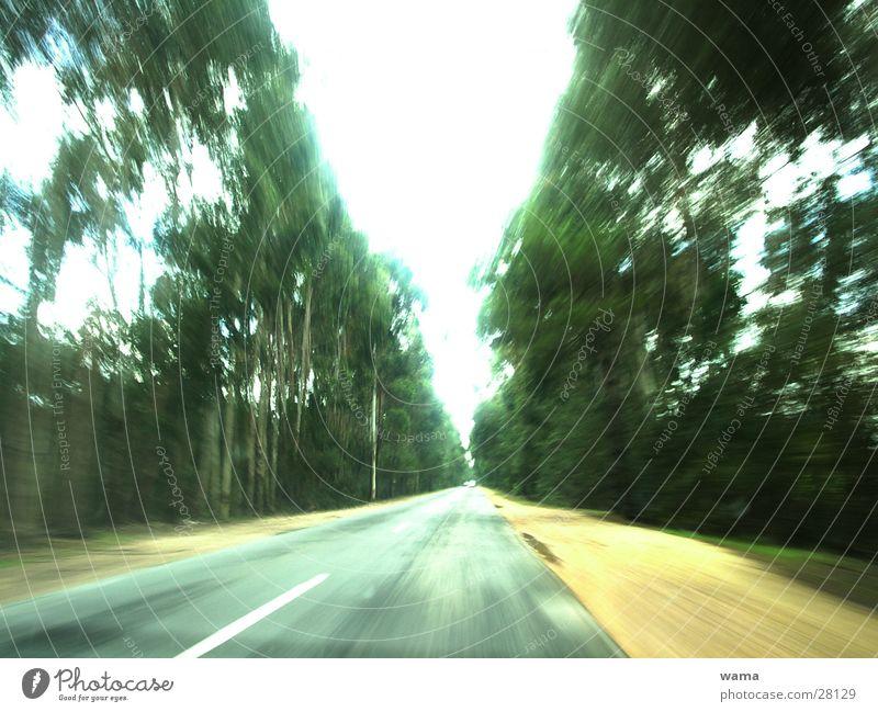 roadtrip Baum Freude Ferien & Urlaub & Reisen Verkehr Geschwindigkeit fahren Asphalt Dynamik Portugal Süden Landstraße