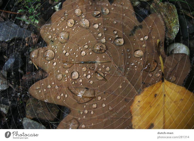 Kondensation auf einem Blatt Pflanze Erde Wassertropfen Herbst Baum Tropfen Natur Kondenswasser Feuchtigkeit Boden Farbfoto Nahaufnahme Menschenleer