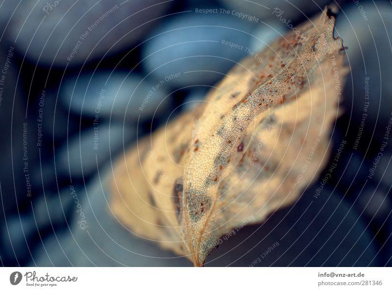 Herbst Natur blau Blatt ruhig gelb Umwelt braun Wetter gold Klima herbstlich