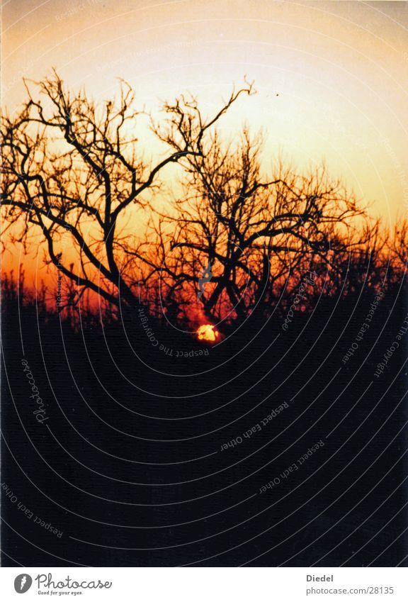Sunset Tree Baum Sonnenuntergang Himmel Stimmung